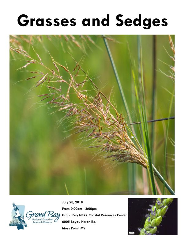 grasses and sedges-July 2018_Page_1